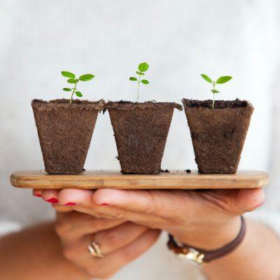 dias para se ser sustentável e consiente